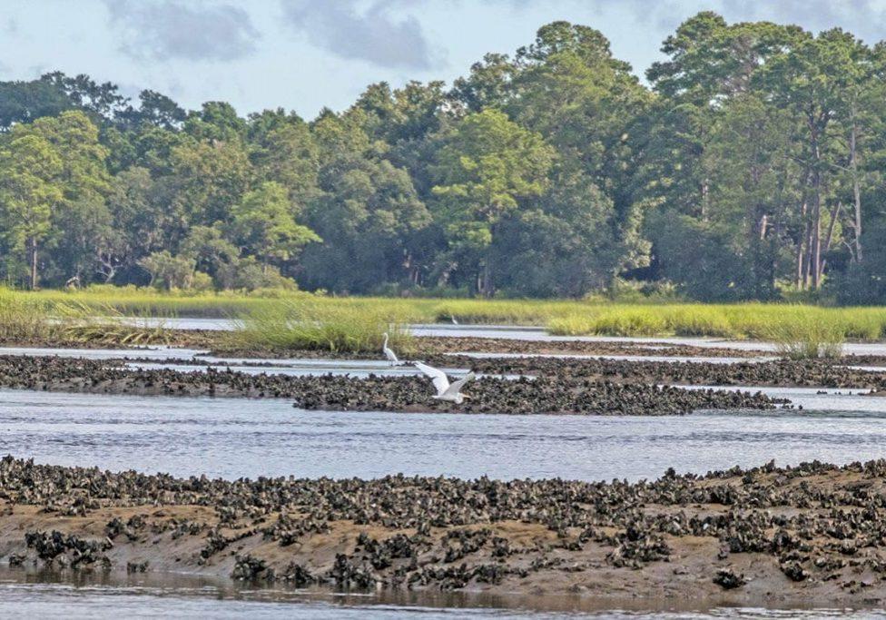 oyster farm with bird